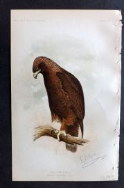Ridgway 1893 American Bird Print. Golden Eagle 13